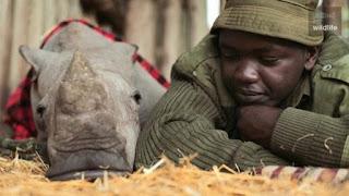 Los héroes, que protegen a los últimos 3 rinocerontes blancos del mundo