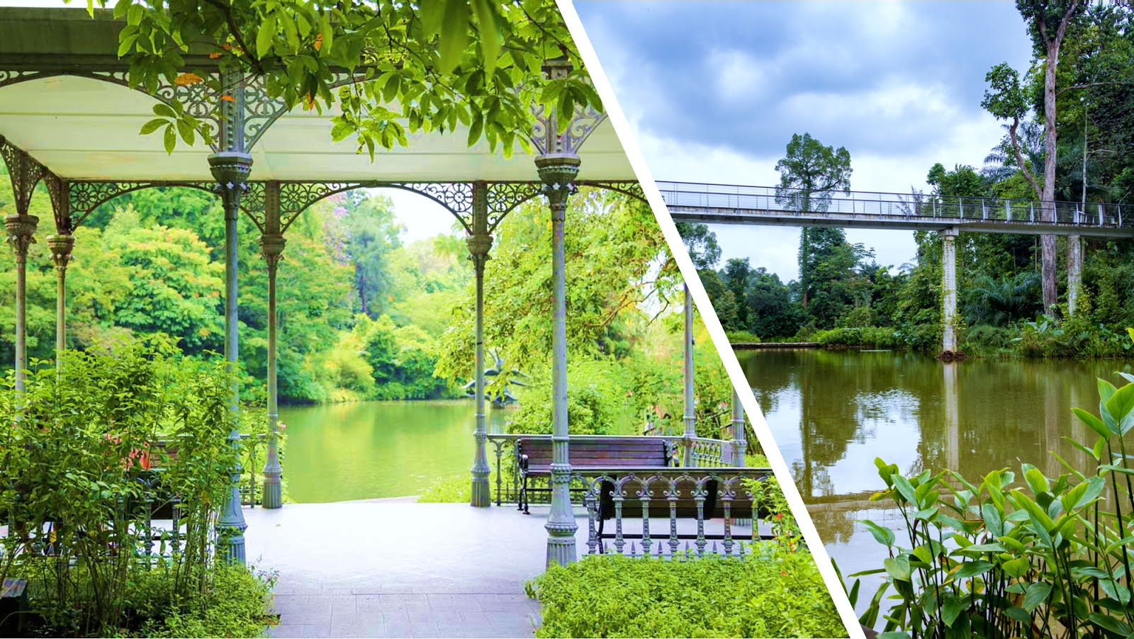Singapore Botanic Gardens Getting There Map Top Attractions National Orchid Garden Must Know Faq