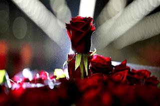 Contoh Puisi Bertema Tentang Cinta Dan Rahasia