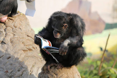 Zoo goers 'inspired' by reading chimpanzees