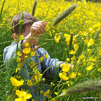 Playing with buttercups