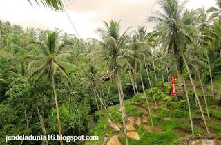 Ayunan Tebing Eksrtim Terrace River Pool Swing Bali