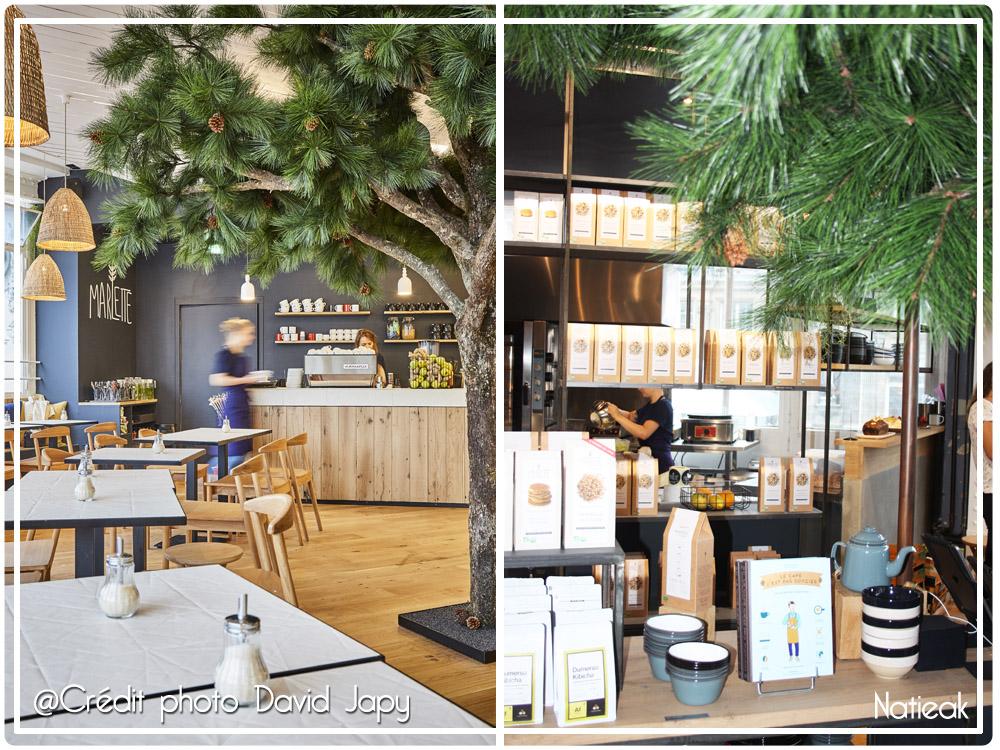 café boutique Marlette et le pin magestueux