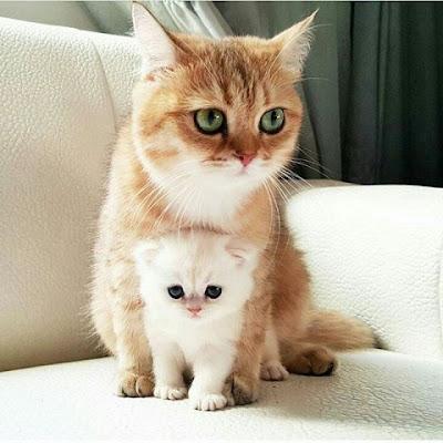 Beberapa Manfaat Ketika Melihat Video Kucing 3