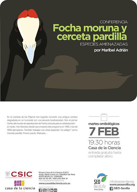 Conferencia: Focha moruna y cerceta pardilla. Por Maribel Adrián, 7 de Febrero 2017. Grupo Local SEO-Sevilla.