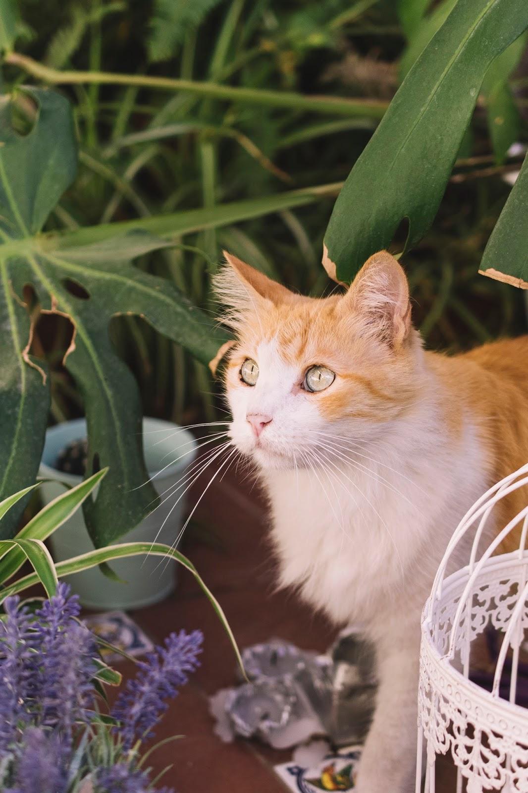 Kedilere karşı alerjiler: semptomlar ve tedavi
