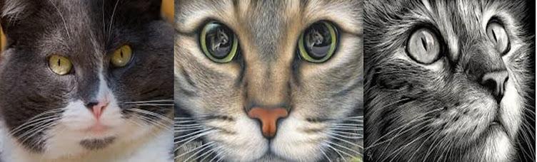 banner gatos online bebedouros para gatos