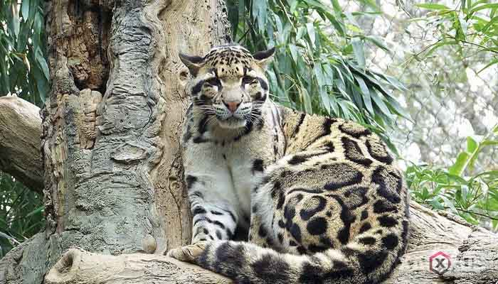 10 Binatang Atau Hewan Buas Yang Ada di Indonesia