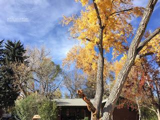 Beautiful autumn day in Boulder Colorado