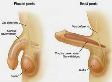How Does Kegel Exercises Help Premature Ejaculation