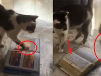 Subhanallah! Kucing Lucu Ini Menolak Injak Al-Qur'an, Videonya Jadi Viral dan Banjir Pujian Netizen
