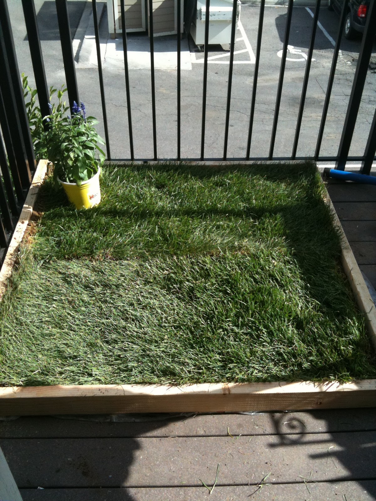super dog charlie pants and me: Dog Potty for Patio: Build ...