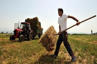 Ποιοι αγρότες εντάσσονται στο καθεστώς ΦΠΑ