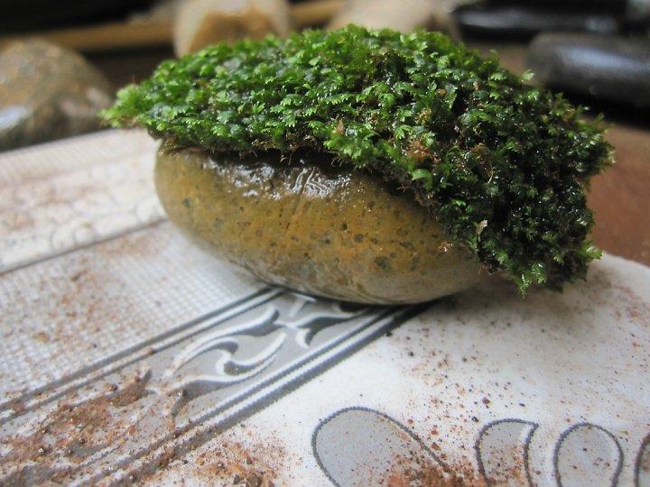 kinh nghiệm xử lý mini fiss thủy sinh bám đất lá cạn -  thảm fiss được nằm gọn trên đá cuội
