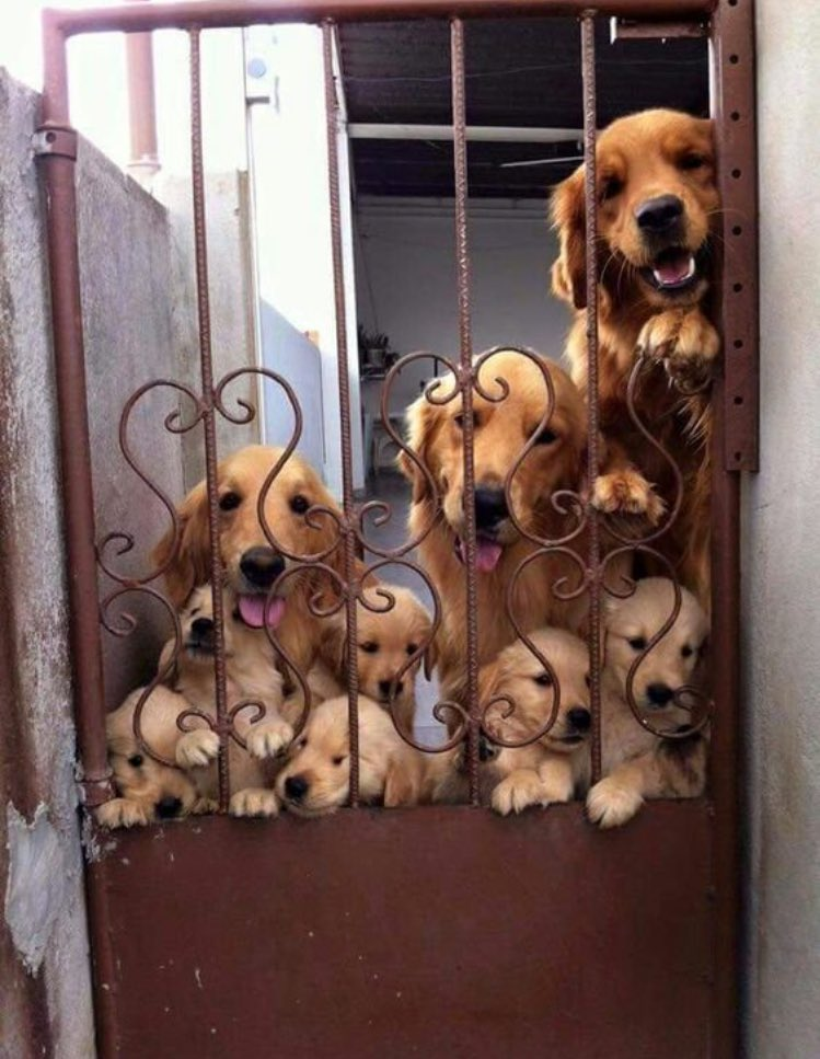 Cute dogs - part 153, cute dog pictures, best dog photos, dog images