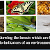 Role of insects as bio-indicator of environmental pollution