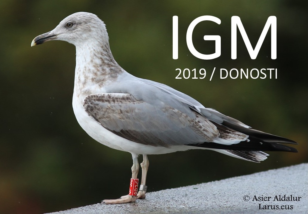 International Gull Meeting 2019