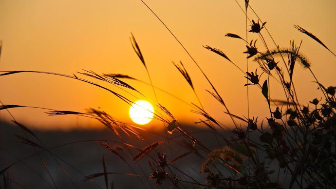 Wallpaper: Hot Sunset. Grass. Summer