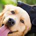 7 τροφές που βοηθούν την όραση του σκύλου...