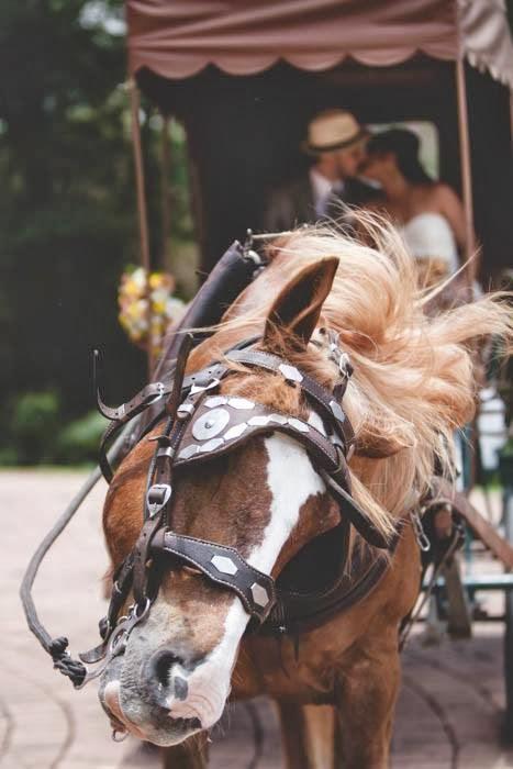 casamento-vale-verde-noivos-carruagem-cavalo