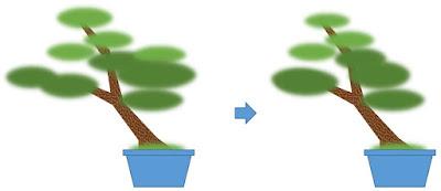斜幹樹形の剪定の前と後の比較