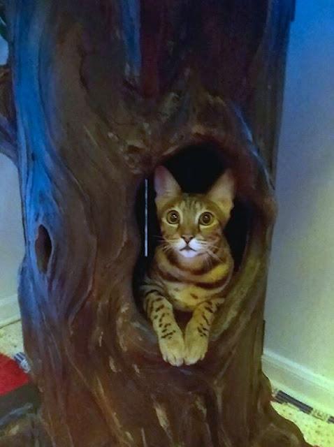 Unique Cat Tree