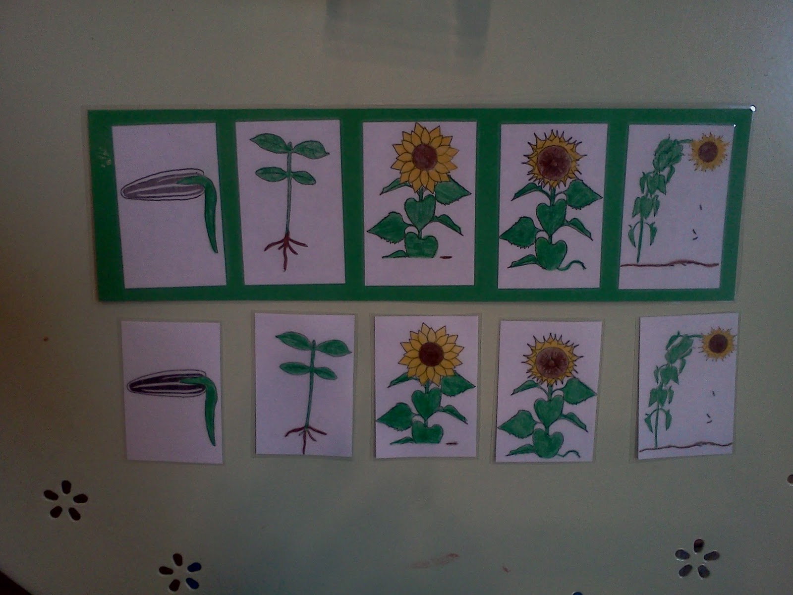 Montessori Design Sunflower Sequence