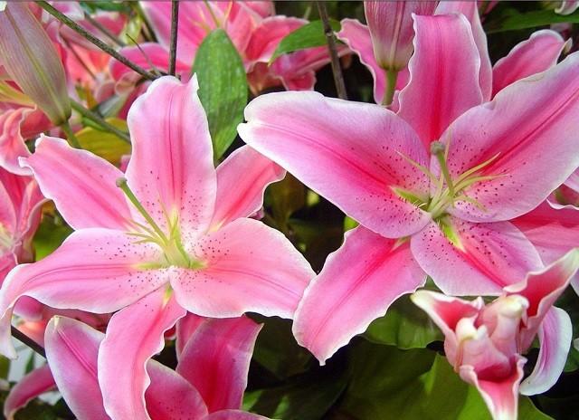 hoa ly dep nhat 6