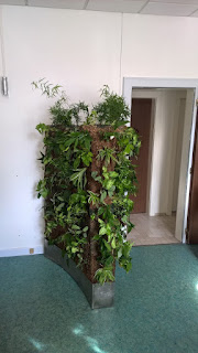 mur végétal sphaigne bac inox