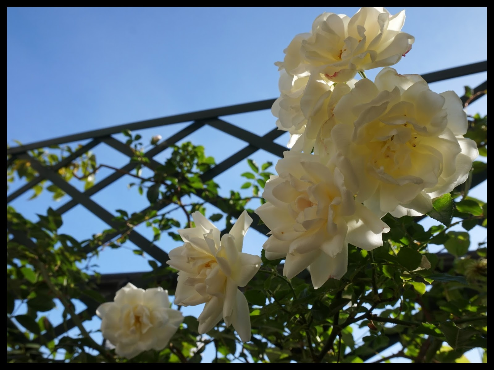 Passion terrasse opalia en hiver - Fleurir sa terrasse exterieure ...
