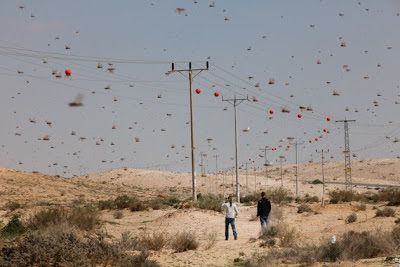 locusts arriving over the Negev desert