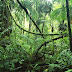 Fungsi hutan bagi kehidupan manusia