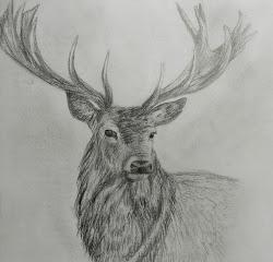deer pencil drawings sketches drawing sketch easy rose heads animal trees cornelius hollie tattoo explore