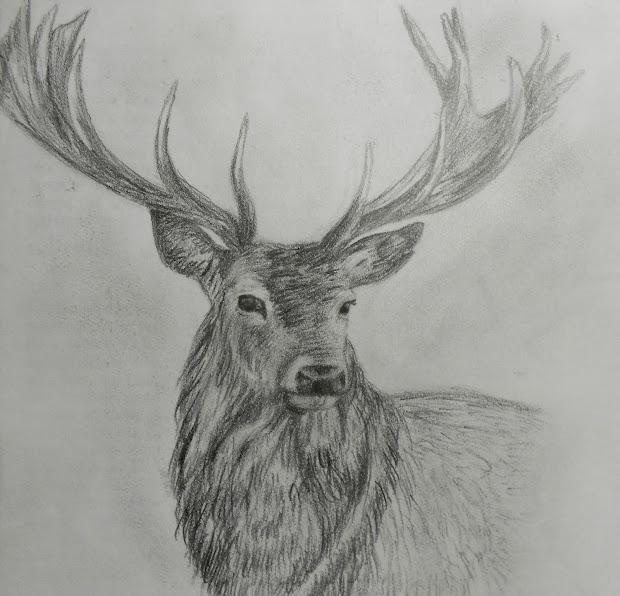 Hollie Rose Cornelius Sketches