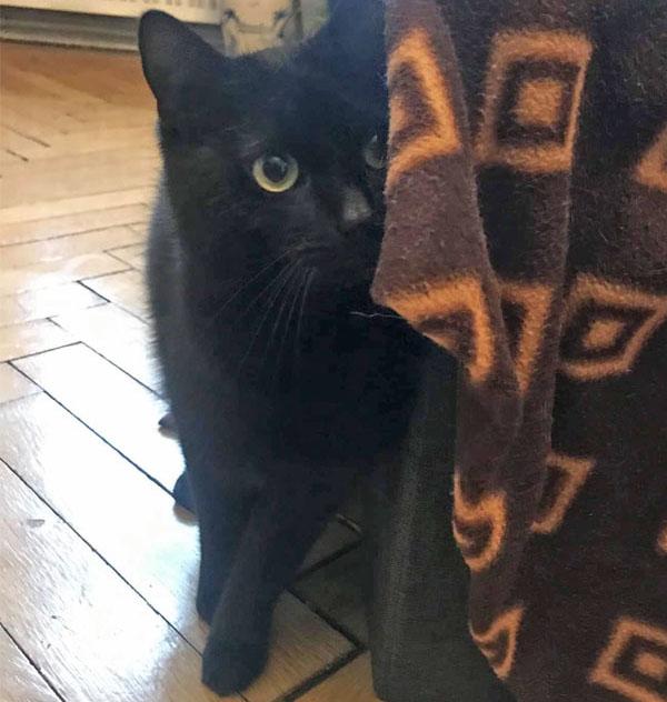 black cat, floor