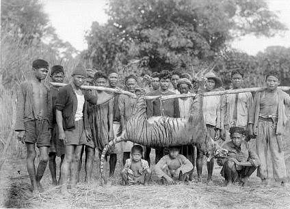 Pesta Rakyat: Tradisi Mengadu Binatang Rampogan Harimau / Macan