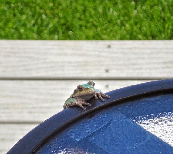 Simpatica imagen de ranas  en una fuente de agua