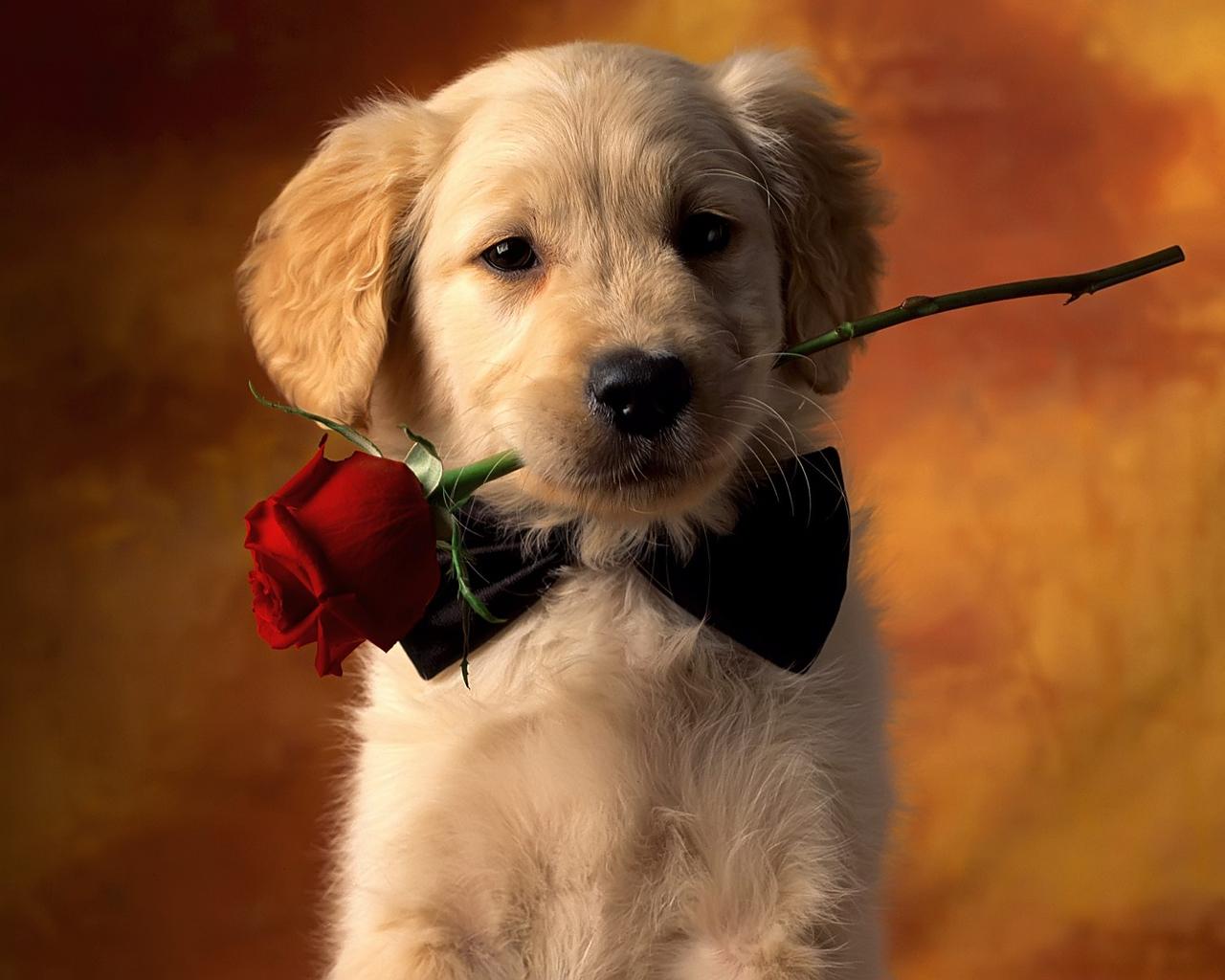 Gambar Anak Anjing Yang Lucu Lucu Dan Imut Wallpaper