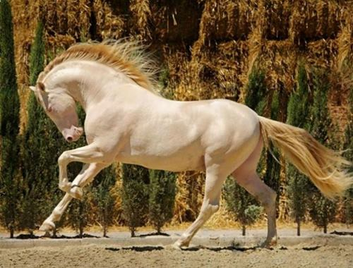 Majestic Horses With Most Unique And Splendid Colors