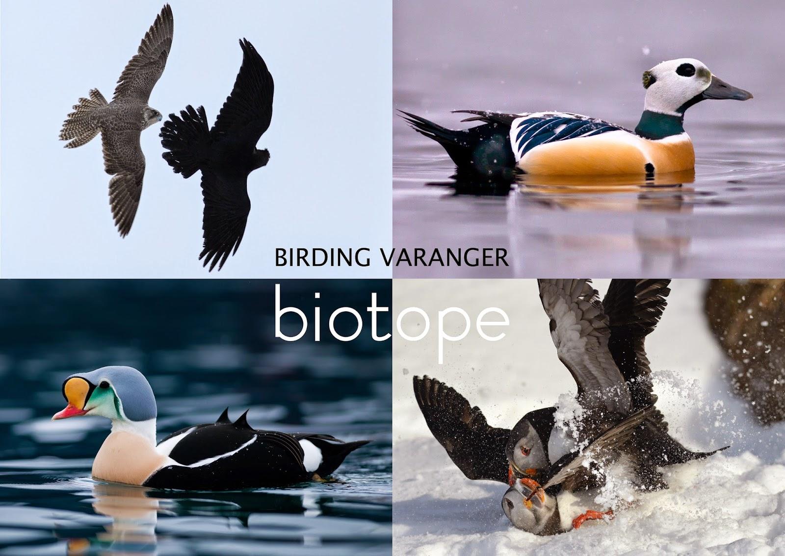 biotope: birding Varanger | 1600 x 1134 jpeg 323kB