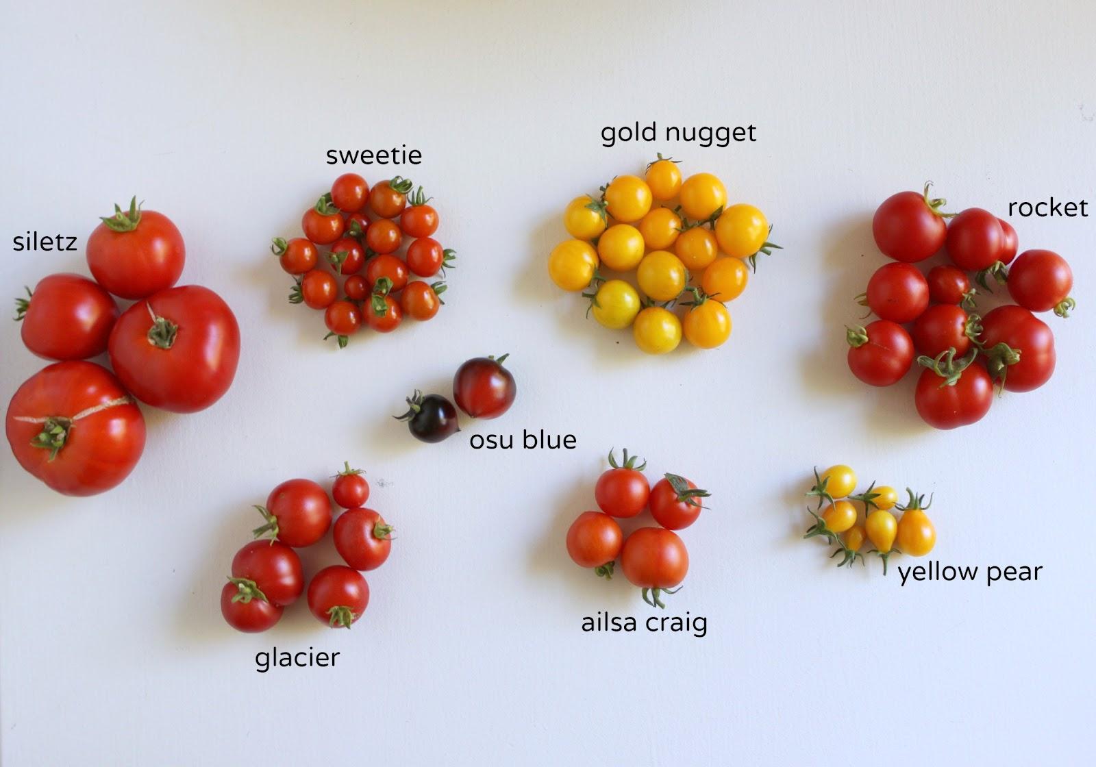 Jane Richmond Blog: In the Garden // Tomato Review