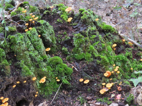 green moss and mushroom