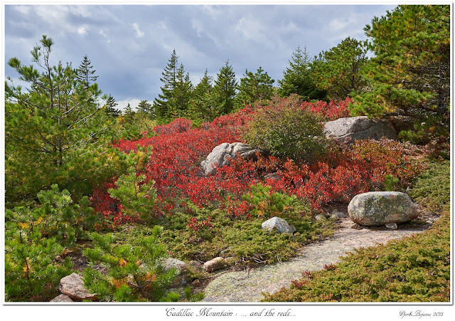 Cadillac Mountain: ... and the reds...