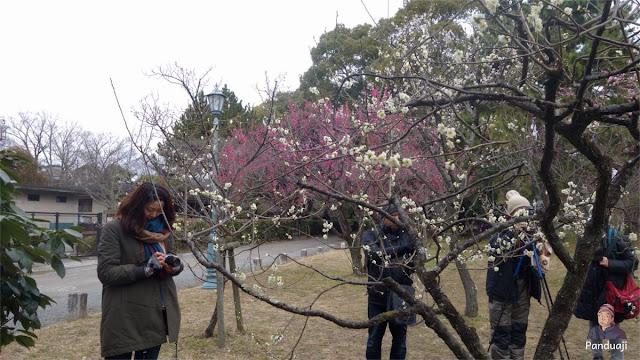 Orang Orang rebutan Spot Foto Bunga Plum