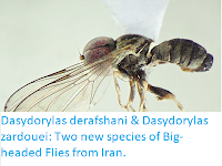 http://sciencythoughts.blogspot.co.uk/2018/01/dasydorylas-derafshani-dasydorylas.html