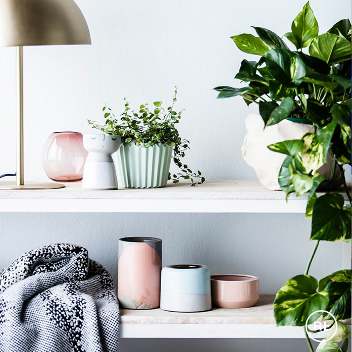 Shelfie Styling with Pastels and Plants