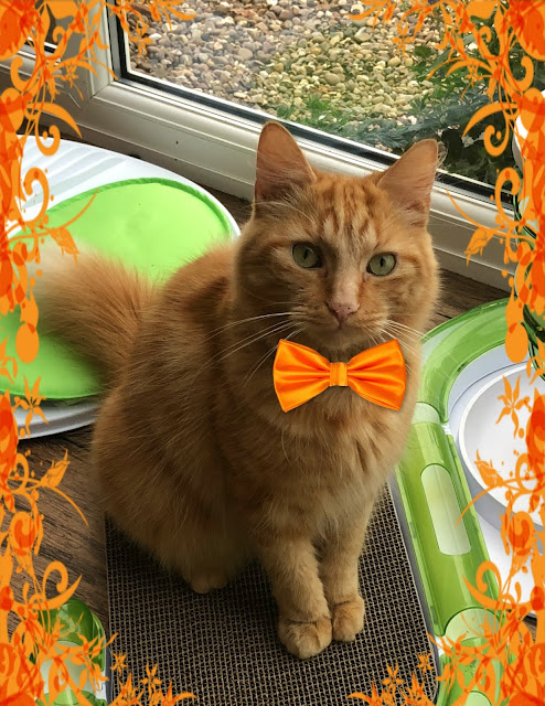Fudge Wearing Orange For Crockett @BionicBasil® Special Blog Hop