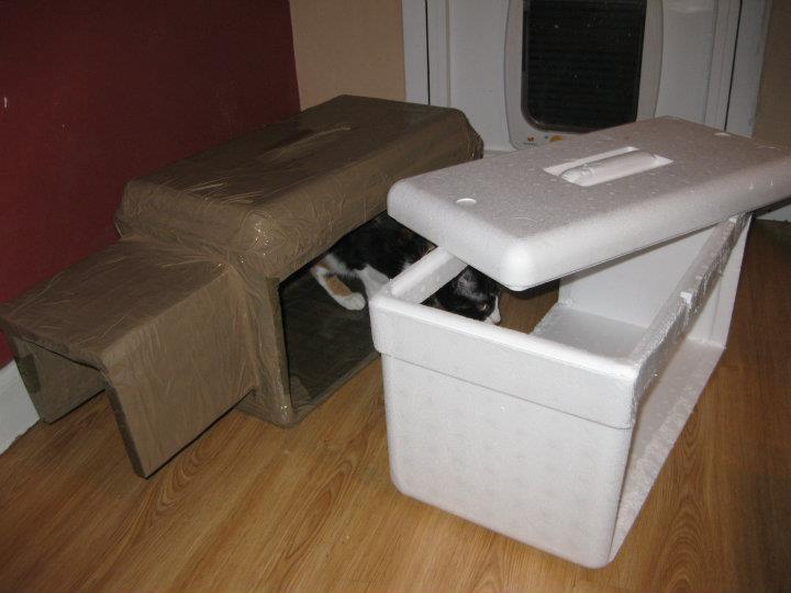 Todo sobre mi gato colonias felinas gesti n sostenible - Casas para gatos baratas ...