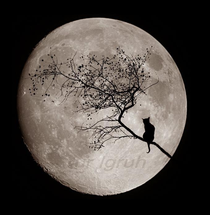 Radicofani ospita Under the same Moon In Val dOrcia
