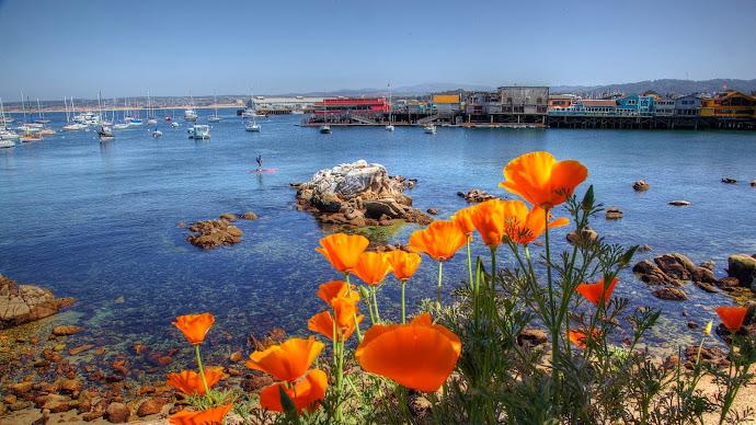 Wallpaper: California Poppies and Fisherman Wharf